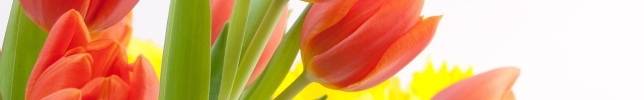 Tulpen_1280x200px